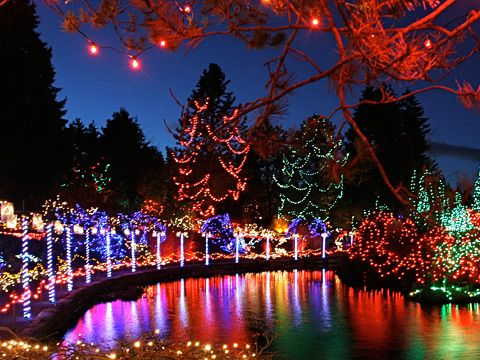 VanDusen Botanical Garden Christmas lights!