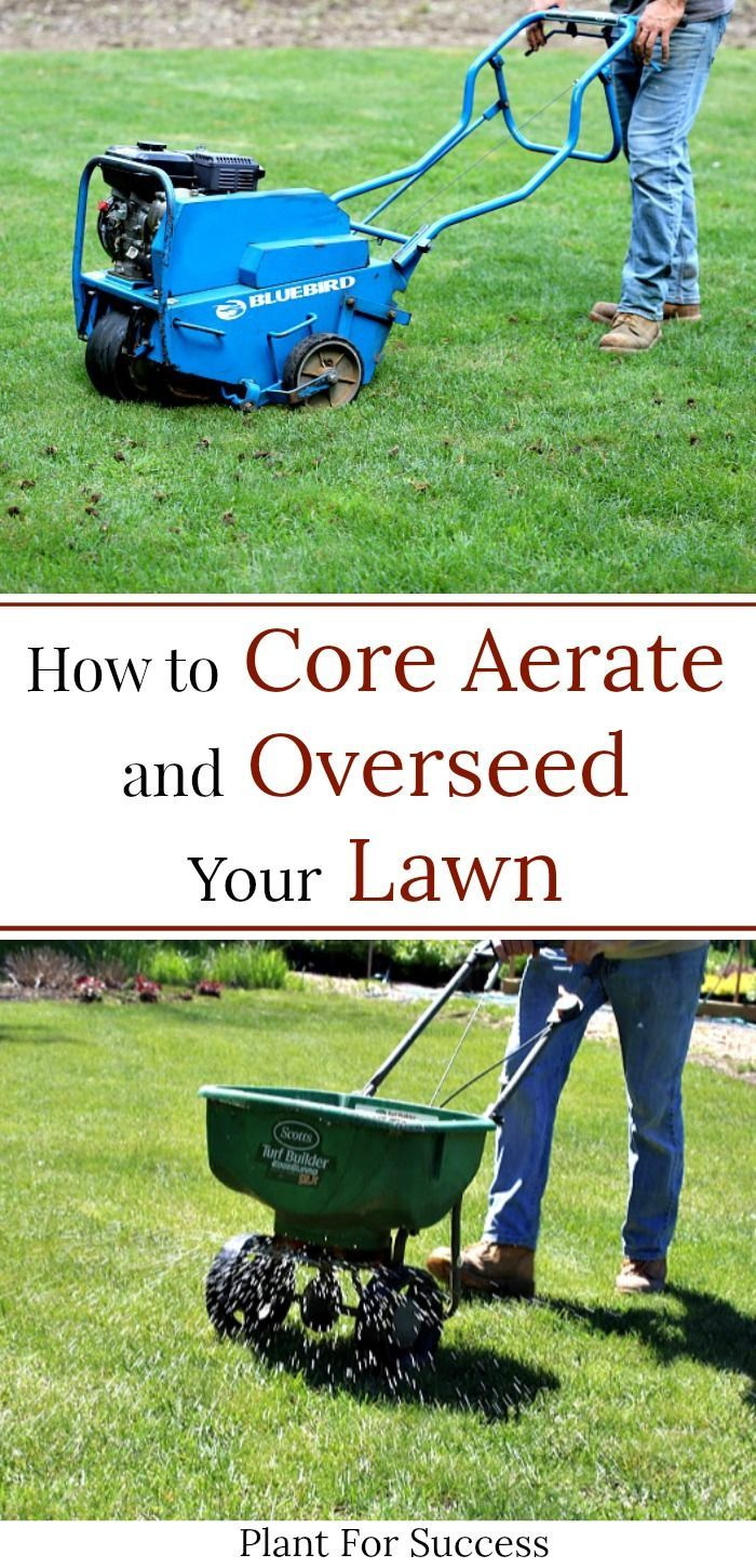 Core Aeration And Overseeding In 2020 Overseeding Core Aeration