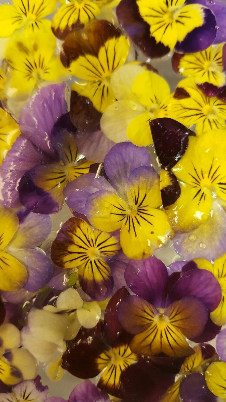 Freshly picked Pansies for tonight's  desert decor.