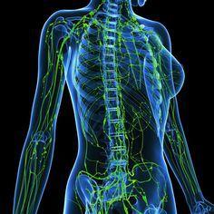 Ольга  Бутакова: Лимфатическая система, о чем не знают 90% врачей
