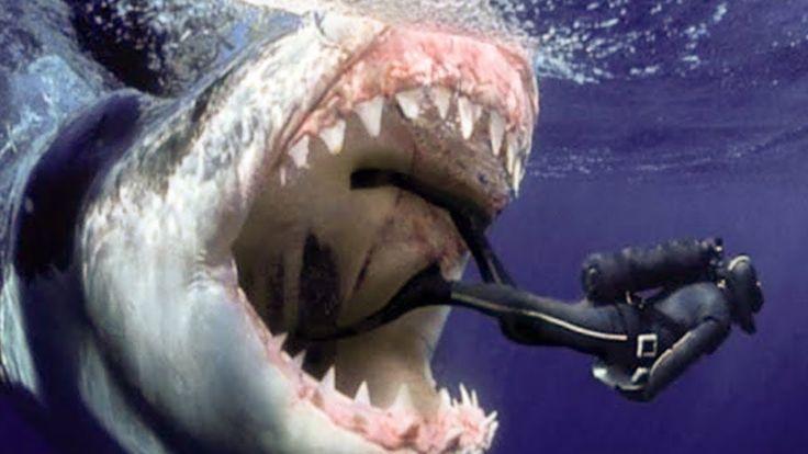 Megalodon Hai Bilder