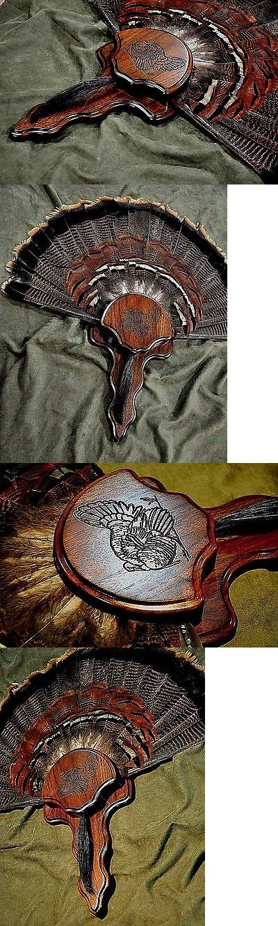 Taxidermy Supplies 71130: Walnut Wood Wild Turkey Fan Tail Beard Panel Trophy Display Plaque Taxidermy -> BUY IT NOW ONLY: $49.95 on eBay!