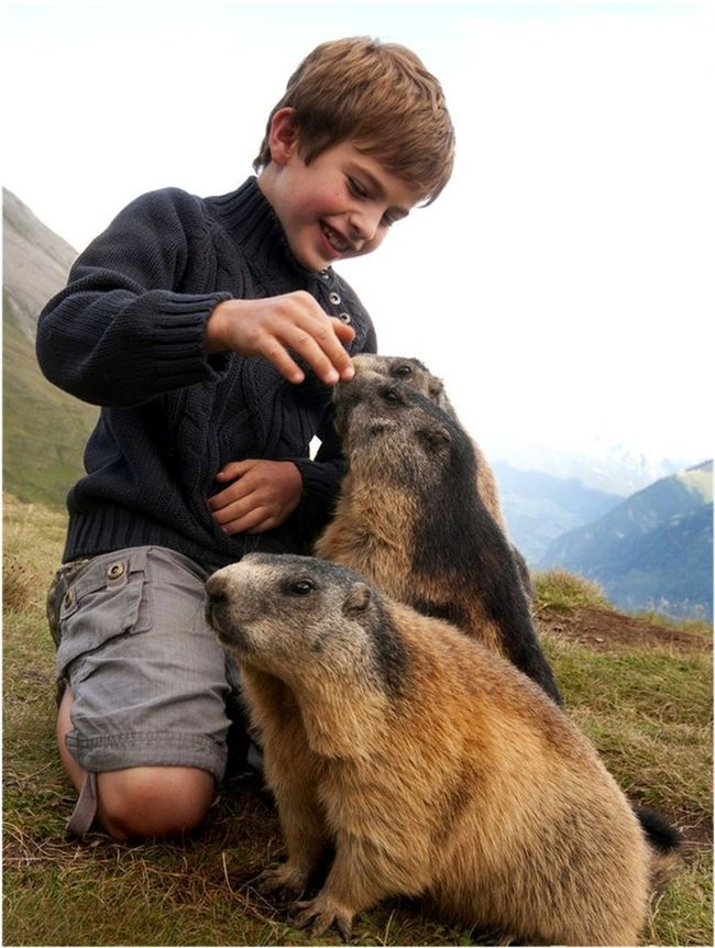 The marmots allow Matteo to feed and play with them like he was one of the pack.