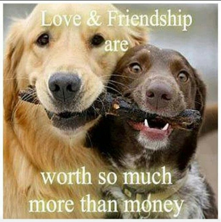 Best Dogs For Friendship