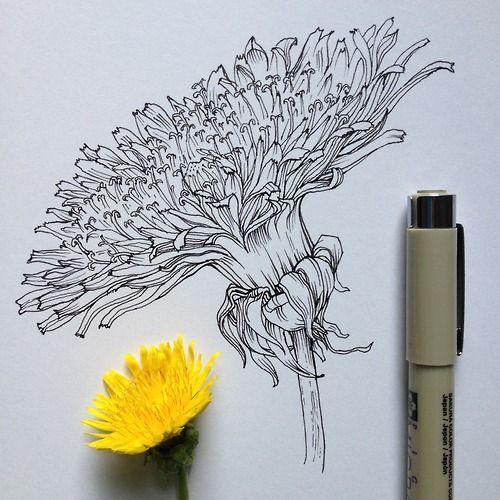 Dandelion Flower | Illustration by Noel Badges Pugh