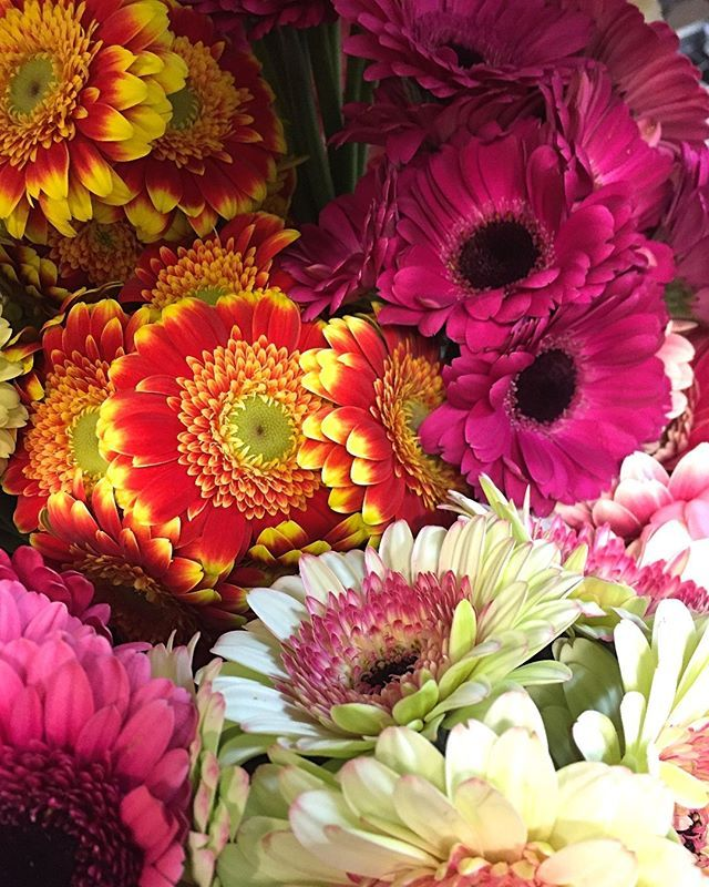 Here With Just Some Of The Different Varieties Of Gerbera We Have In The Online Market For You Gra Wholesale Flowers Online Flowers Australia Flower Market