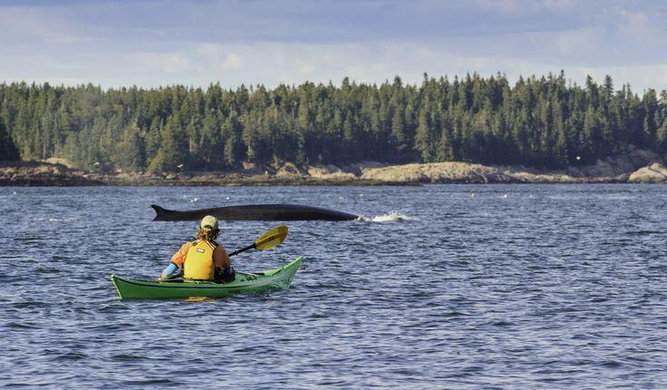 Prêt(e)s pour l'aventure en kayak de mer dans la baie de Fundy? De grosses surprises pourraient vous attendre!   Nouveau Brunswick, vacances au Canada #ExploreNB