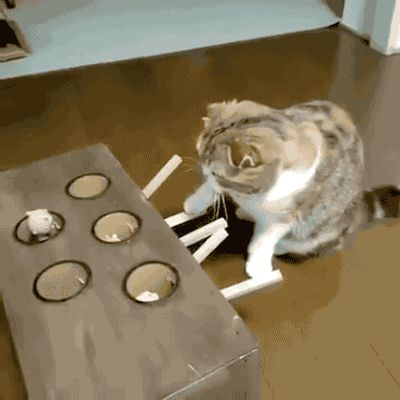 "gifsboom: "" Ingenious cat toy. [video] """