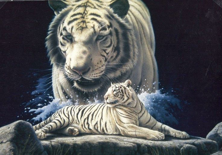 White tiger painting by Rob Macintosh