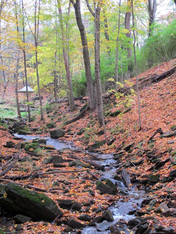 Stream inside the Dundas Valley Conservation Area - stunning scenery abounds