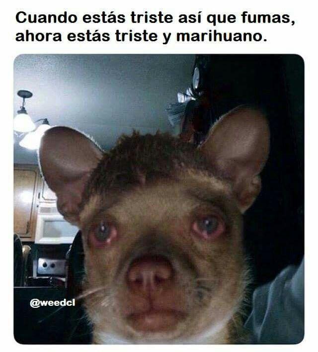 Memes Marihuano Humor Divertido Sobre Animales Memes Divertidos Imagenes Graciosas