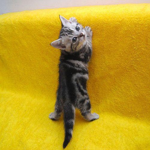 kitten  呼んだ…?