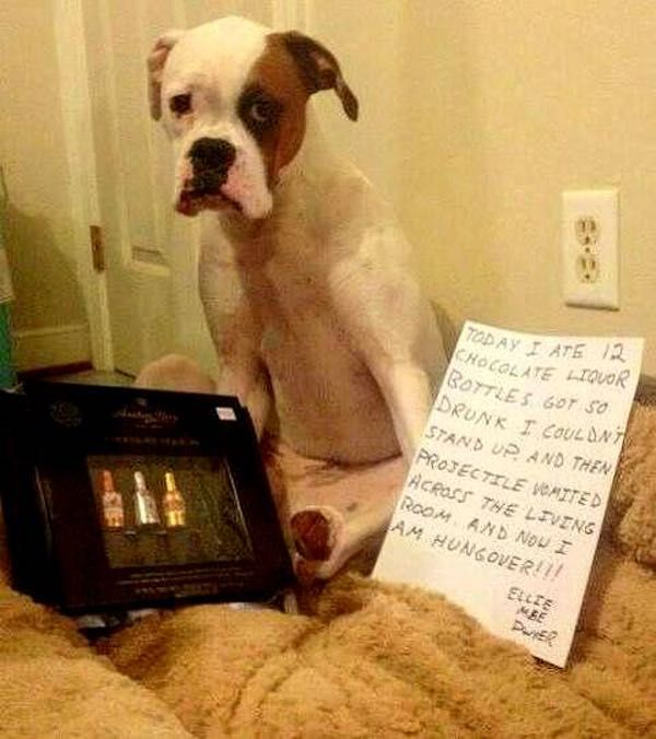 We've All Had a Rough Nigh... is listed (or ranked) 8 on the list 40 of the Most Hilarious Dog Shaming Photos Ever