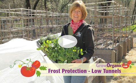 How to Protect Plants from Frost - Low Tunnels - go to veggiecare.com for material specs for your size garden
