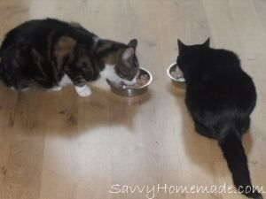 Many commercial cat foods contain high levels of chemicals, additives and preservatives that can end up harming your cherished cat. This has led a lot of people to look for alternative home made cat food recipes to offer their cats a healthier option. - savvyhomemade.com