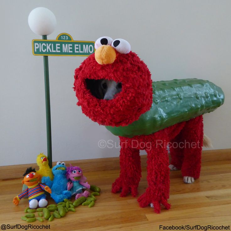 """Halloween 2014 Pet Photo Contest"" contest : Pickle me Elmo! -"