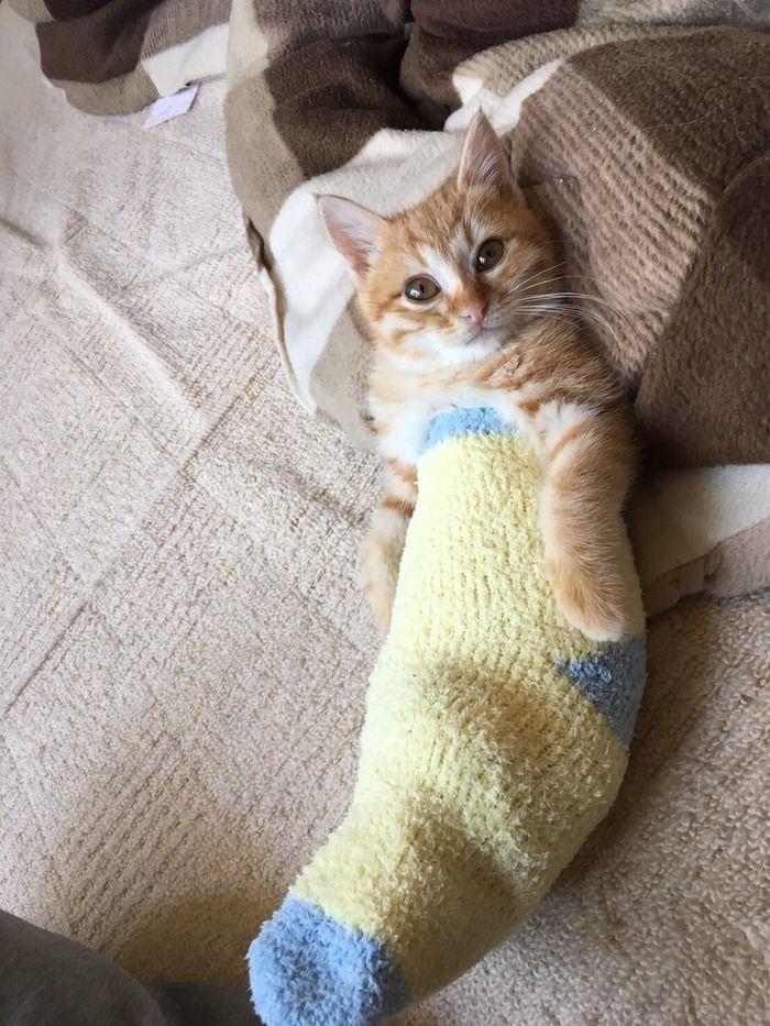ネコ+靴下=かわいい:ハムスター速報