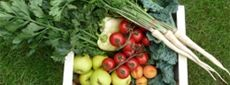 Farmářské potraviny a bio potraviny - Sklizeno