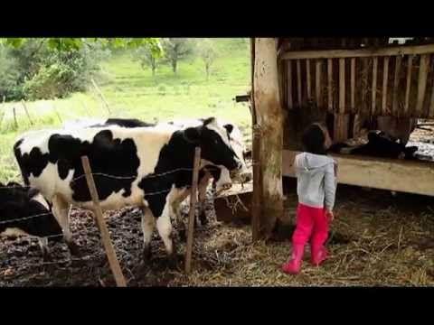 Força da agricultura familiar na produção de leite é tema do Rural Conte...