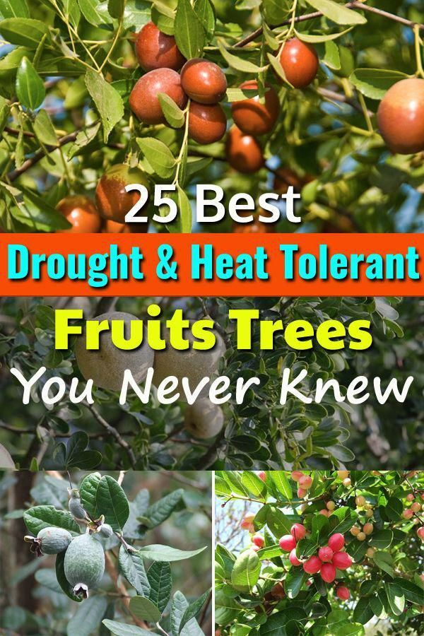 Container Gardening Ideas For Uk Containergardeningideas Fruit Trees Backyard Fruit Trees In Containers Fruit Bushes