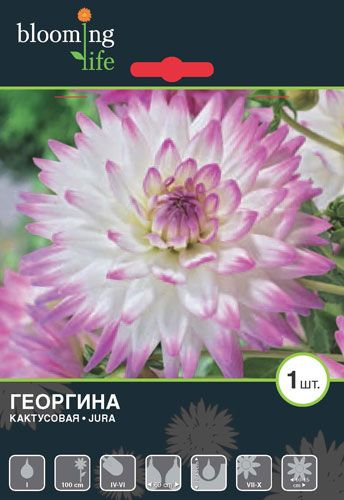 Dahlia-Jura.jpg (344×500)
