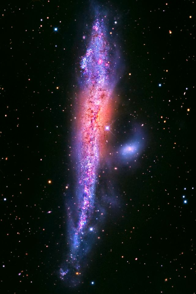 NGC 4631 (the Whale Galaxy or Caldwell 32) is a spiral galaxy, 30 million ly away in Canes Venatici. It has a central starburst, and is interacting with dwarf elliptical galaxy NGC 4627. The pair together is ARP 281