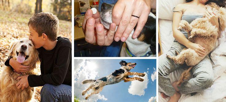 Suplementos y vitaminas para perros cachorros y adultos - Mujer de 10