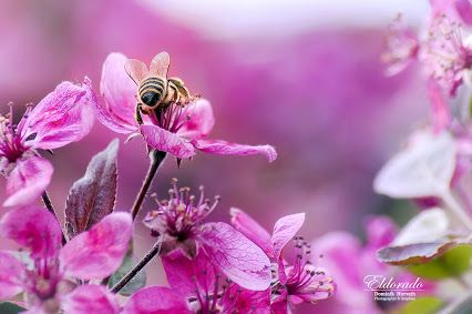 "Dominik ""Eldorado"" Horvath – Google+ Jaro 2014 / Spring 2014 #eldoradothemeart #natural #flowers #macro"