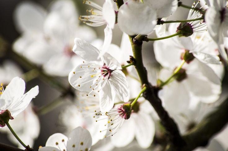 Ulotny i chwilowy wysiłek natury, aby pokazać swoje piękno