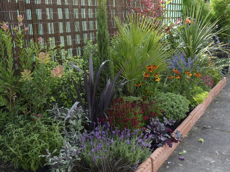 17 best images about mediterranean border on pinterest for Garden border planting ideas