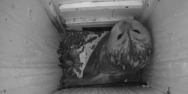 Waldkauz-Webcams gestartet!
