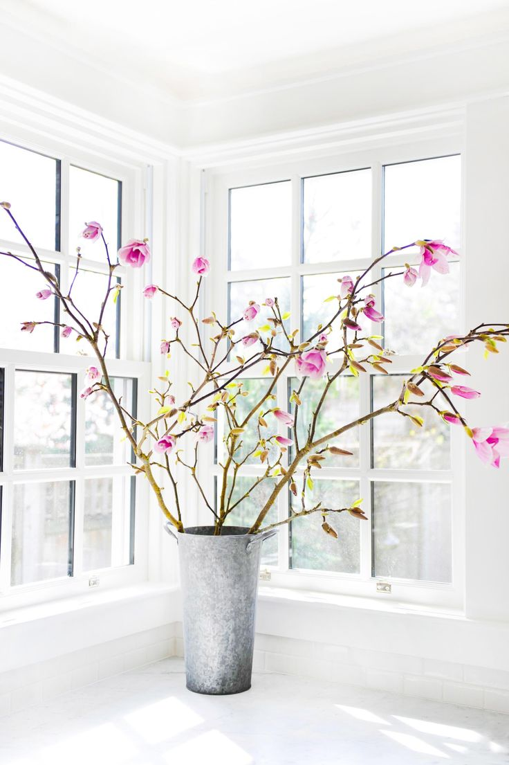Some Magnolias soaking up the sun in my kitchen Photo By Tracey Ayton