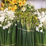 Wholesale flowers delivered to UK