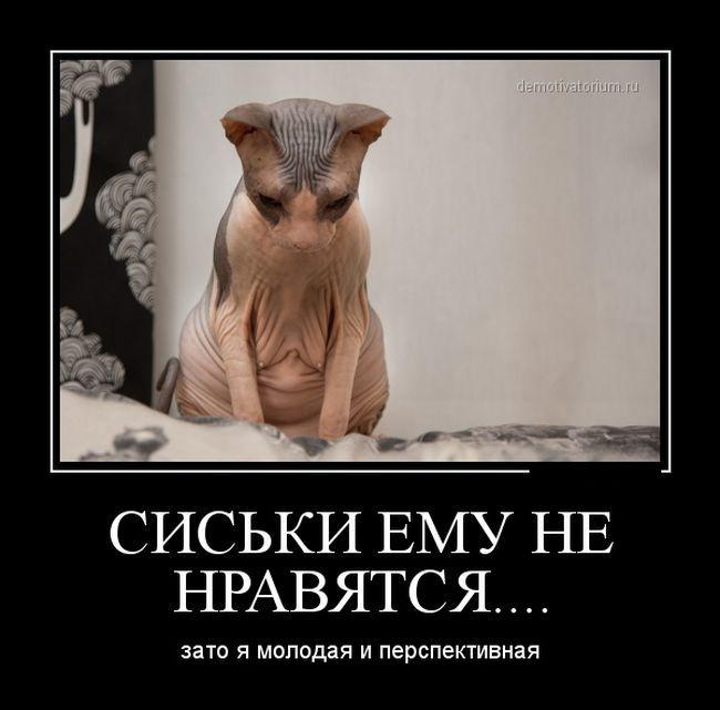 демотиваторы: 22 тыс изображений найдено в Яндекс.Картинках