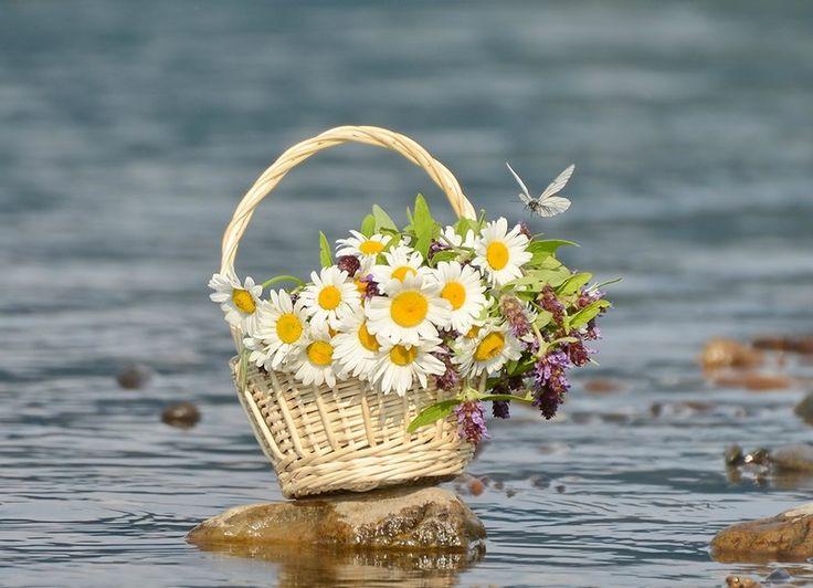 открытки цветы и море фото его посадили машину