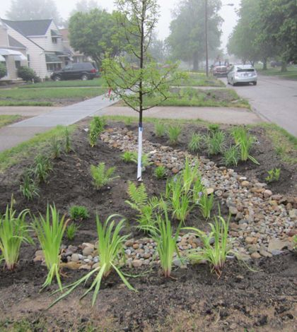 Rain gardens in a Cleveland, Ohio neighborhood may help in the reduction of harmful runoff. #EnvironmentalMonitor http://www.fondriest.com/news/cleveland-rain-garden-program-benefits-neighborhood-and-cuyahoga-river-tributary.htm