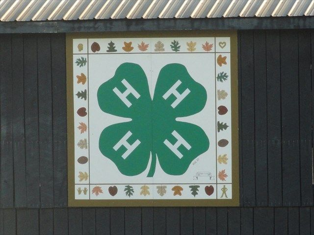 4-h quilt - Google Search