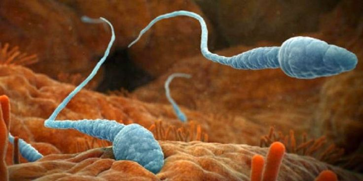 Fakta Unik tentang Sperma