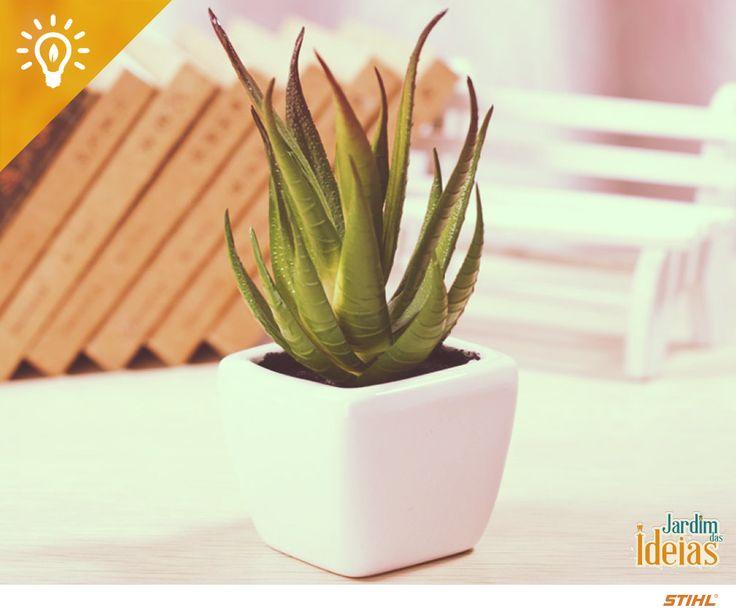 Além de suas propriedades benéficas no alívio de queimaduras e corte, a Aloe Vera também tem um papel importante dentro de casa: a planta também é ótima para purificar o ar, pois ajuda na limpeza de poluentes encontrados em produtos químicos de limpeza.