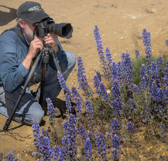 Wind Wolves:  David's Back Yard by Wayne Wong on Capture Kern County // While I was cogitating over how to improve my lupine shots, David Clendenen set up right next to me, right by his SUV.  It was a great opportunity to get a portrait of the artist in action.  David is very smooth  and graceful, with measured moves of great confidence...he knows what he wants and quietly gets the shot.  He also used an LED remote light as fill.  You couldn't ask for a better man to lead a trip like…