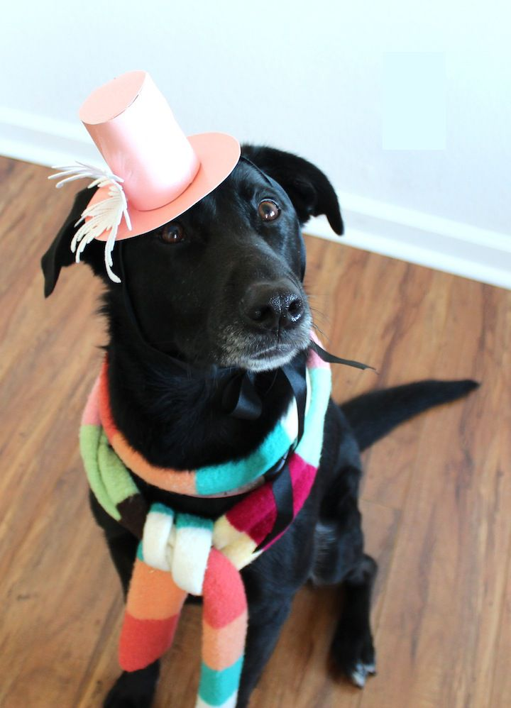 new years eve dog hat