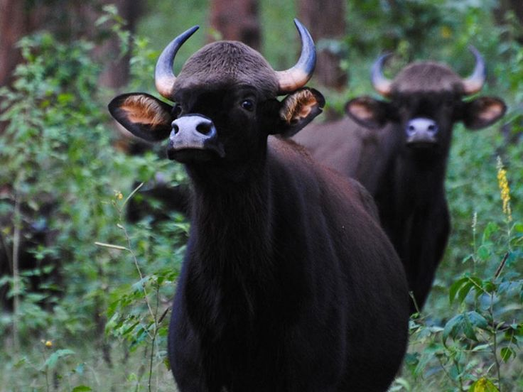 Murti Wildlife Sanctuary - in West Bengal, India