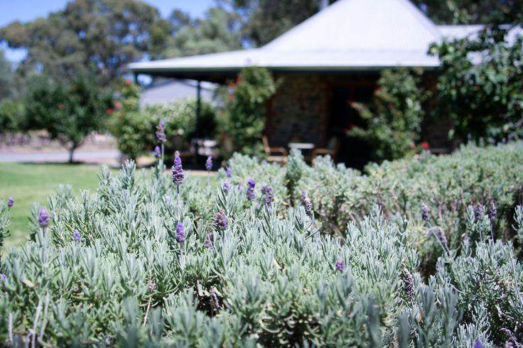 Turkey Flat Vineyards Cellar Door, Barossa Valley, Australia