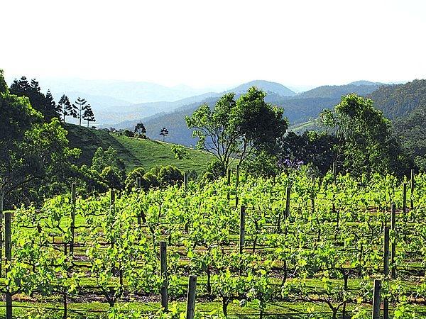 The wineries #airnzsunshine