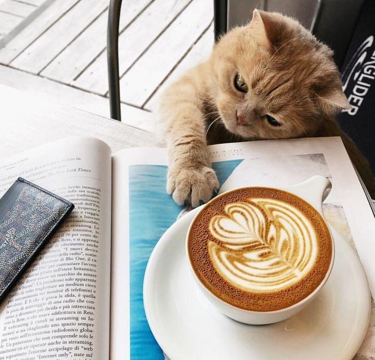 Доброе утро картинки с котятами и кофе и надписями