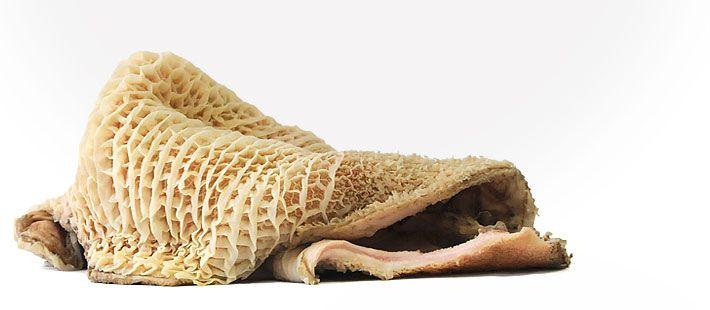 Raw Feeding: Weißer Pansen ist in vielen Ländern eine Delikatesse und wird auch in Deutschland als Kutteln in vielen Speisekarten geführt. Er ist genau so auch eine gesunde Alternative für Ihren Vierbeiner, insbesondere wenn Sie ein mageres Produkt mit wenig Kalorien suchen. Dieser Pansen ist vollständig gereinigt und schonend vorgegart, daher im Vergleich zum grünen Pansen allerdings auch weniger gehaltvoll. Für Hunde geeignet. #tackenberg #barf #rawfeeding #rohfleisch #hundefutter