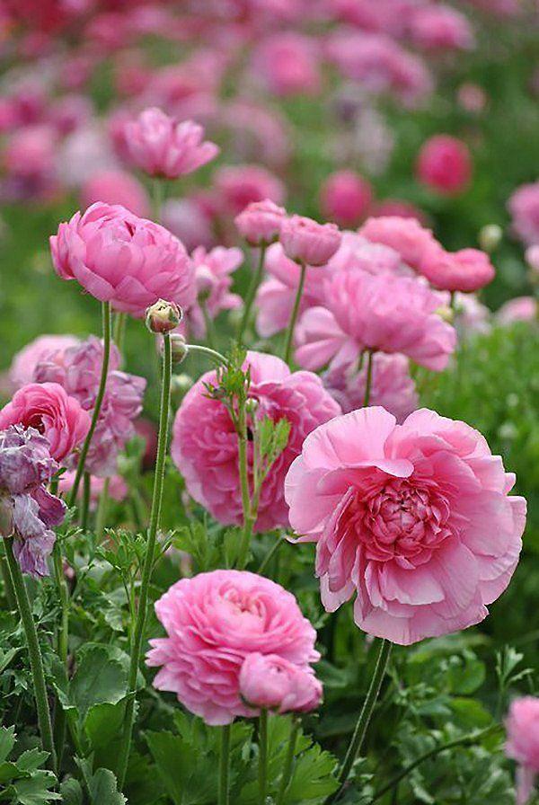 Collection rose – #bijoux en pierre semi precieuse…