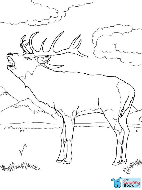 Pin On Deer Coloring Pages