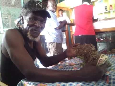 Healing Herbs- The Moringa Fruit & Seed - Jamaican Herbalist - YouTube