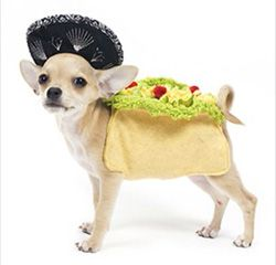 Arrrr-iba!Beautiful Costumes, Halloween Costumes, Dogs Costumes, Pets Ideas, Belle Dogs, Small Dogs Tacos Costumes, Tacos Belle, Dogs Thoughts, Crazy Pets